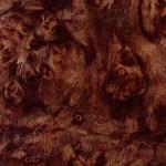 Burl Oak